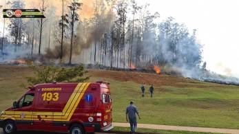 Avião de asa fixa caiu em área de vegetação natural em Piracicaba; segundo os bombeiros, são sete vítimas
