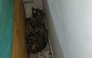 Polícia Ambiental também encontrou mais de 60 jabutis, ratos e camundongos no imóvel dos suspeitos, em Peruíbe