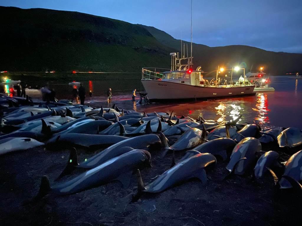 Pequena quantidade de pessoas envolvidas na caça aos golfinhos teria prolongado sofrimento dos animais