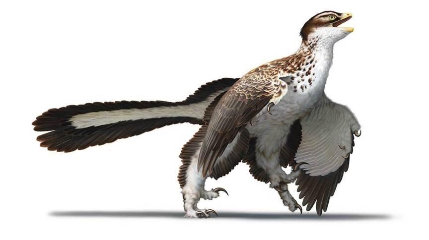 Representação artística de como era o Archaeopteryx quando viveu 155 milhões de anos atrás