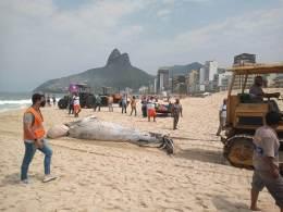 Corpo do mamífero foi levado para o Centro de Tratamento de Resíduos (CTR-Rio), em Seropédica