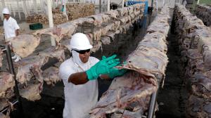 """Rússia restringe compra de carne bovina do Brasil após casos de """"vaca louca"""""""