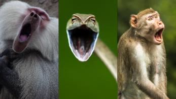 Concurso, que existe desde 2015, quer ajudar a promover a conservação de espécies silvestres e seus habitats de um jeito leve e divertido