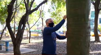 Plantação autônoma de árvores em regiões da metrópole gerou até mesmo um novo santuário para espécies acidentadas