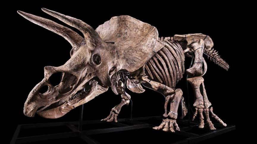 O esqueleto foi encontrado na Dakota do Sul, nos Estados Unidos