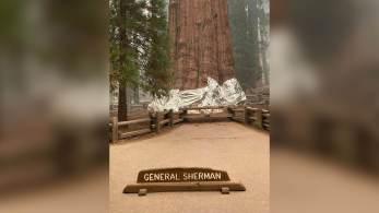 """Base da chamada """"General Sherman"""", localizada em um parque na Califórnia, foi envolvida em material resistente ao fogo"""