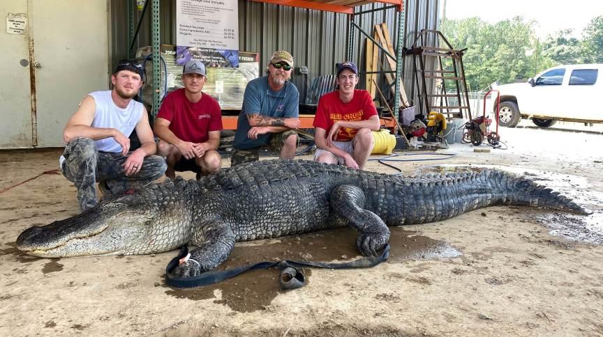 John Hamilton e seu grupo de caça trouxeram um crocodilo de 4 metros com algumas surpresas dentro