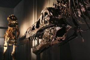 Doenças dos dinossauros podem informar sobre como as espécies viveram e morreram