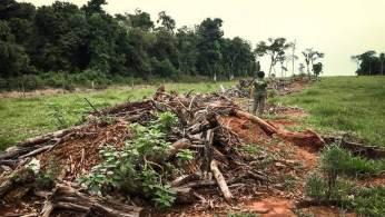 À CNN Rádio, o coordenador Marcos Rosa disse que um estudo aponta que o bioma tem áreas em recuperação