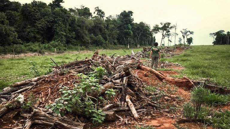 Menos de 1% das propriedades privadas têm processo de desmatamento, diz pesquisador