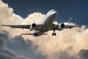 Juiz autoriza advogada a viajar com coelho na cabine do avião