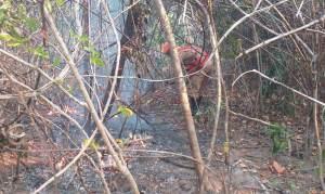 Incêndio na Chapada dos Veadeiros já dura cinco dias e destrói 10 mil hectares