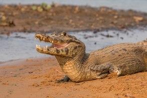 Intervenção fez parte da operação em Mato Grosso do Instituto Brasileiro do Meio Ambiente e dos Recursos Naturais Renováveis (Ibama)