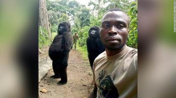 """Gorila """"Ndakasi"""" morreu abraçada a cuidador, que fez relato emocionante sobre sua relação com o animal"""