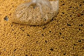 Maior compradora mundial de soja importou 6,88 milhões de toneladas em setembro, ante 9,79 milhões de toneladas no ano passado