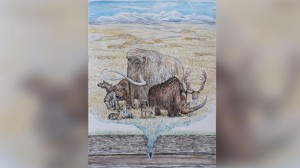 Mamutes e grandes animais da Era do Gelo viveram por mais tempo do que se pensava