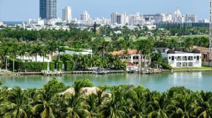 Flórida pode abandonar palmeiras para combater mudanças climáticas