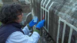 Em Roma, bactérias são usadas para salvar monumentos da ruína