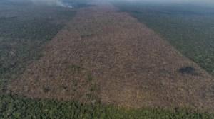 Desmatamento na Amazônia em setembro foi o maior para o período em 10 anos