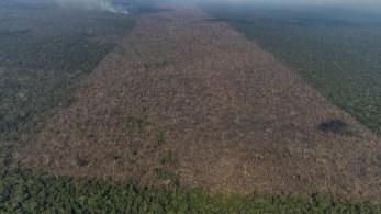 Acumulado do ano é o pior da década: 8.939 km²; Área verde perdida no mês passado equivale ao território da cidade do Rio de Janeiro