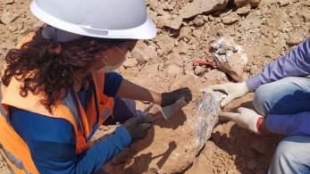 Esse foi o segundo maior achado arqueológico da estrada; pesquisadores acreditam que a região foi habitada por dinossauros há 65 milhões de anos