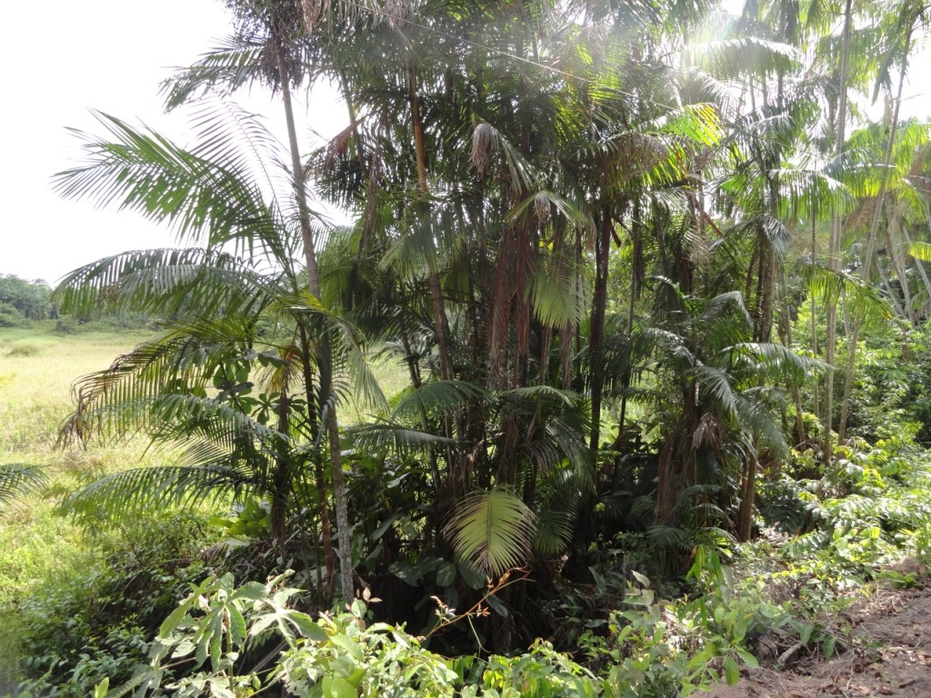 Áreas em processo natural de regeneração no município de Paragominas, Pará