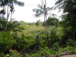 Imazon mostra que vegetação secundária ao longo de 7,2 milhões de hectares pode voltar a adquirir características de floresta madura