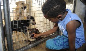Lei que proíbe sacrifício de animais por órgãos de controle de zoonoses é publicada