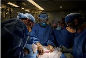 Transplante de rim de porco geneticamente modificado não causou rejeição no corpo humano; método experimental será estudado para outros fins médicos