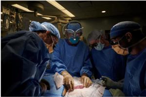 Transplante de rim de porco em humano é realizado pela 1ª vez com sucesso