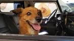 Conheça Leo, o cachorro que salvou a vida de seu dono e se tornou gerente de hotel