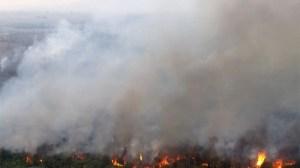 Projeto une tecnologia e educação para evitar incêndios no Pantanal