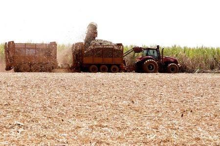 Colheita de cana-de-açúcar em Pradópolis (SP)