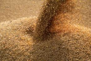 A maior compradora mundial de soja importou 5,936 milhões de toneladas da oleaginosa do Brasil no mês passado