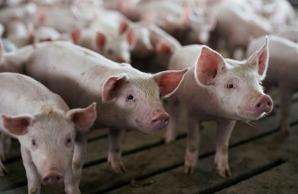 Os preços do animal caíram este ano no país devido ao aumento da oferta e ao abate