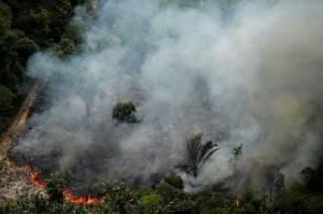 De acordo com o levantamento, desde 2001, entre 103 mil e 190 mil quilômetros quadrados de floresta foram atingidos pelas chamas