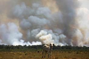 O chefe da delegação brasileira, a maior prevista para eventos deste tipo, é o ministro do Meio Ambiente, Joaquim Leite