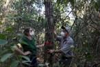 Amazônia está perto de seu ponto de inflexão? Três estudos revelam ameaças