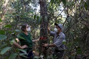 No ano passado, área maior que o Líbano foi cortada da floresta tropical; desmatamento permanece em um nível não visto no Brasil desde 2008