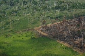 Índice de destruição compõe segundo pior setembro desde 2015, aponta monitoramento do Inpe