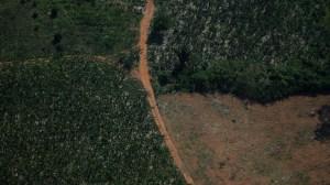 Emissões do Brasil crescem em 2020 com forte influência do desmatamento, diz estudo
